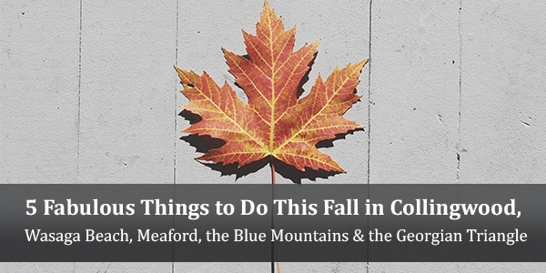 5 Fabulous Things to Do This Fall in Collingwood, Wasaga Beach, Meaford, the Blue Mountains & the Georgian Triangle