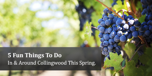 collingwood-spring-activities